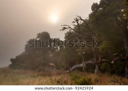Ominous old tree in foggy forest at dusk - stock photo