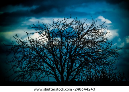 ominous silhouette of a tree on sky background - stock photo