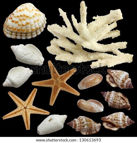 On a black background the starfish, the  top view and from below, sinks of  mollusks  in various types and a branch  of a white coral are isolated - stock photo