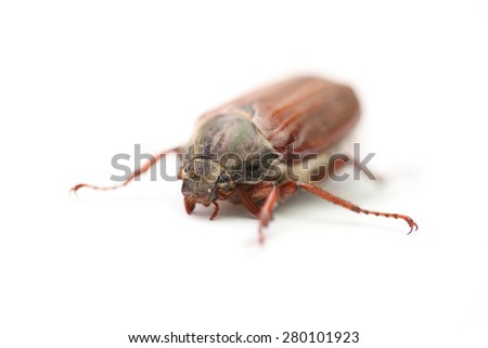 On a photo chafer isolated on white - stock photo