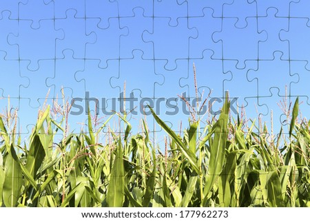 On a puzzle a corn field is shown. - stock photo