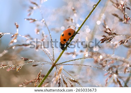 on a summer meadow a ladybug on a grass - stock photo