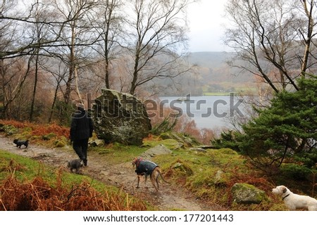 On Low Birk Fell, walking around Ullswater from Howtown to Glenridding with Norfolk Island in background in the Lake District. - stock photo