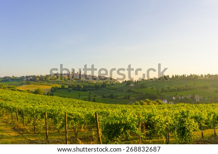 On of the many vineyards near San Gimignano in Tuscany, Italy. Morning picture  - stock photo