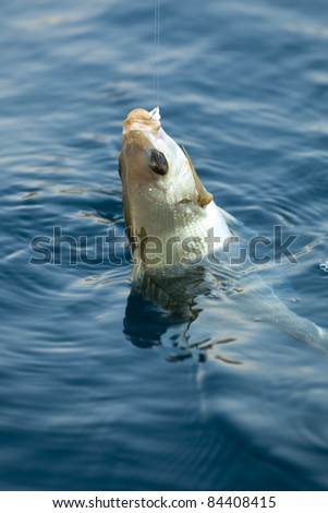 on the hook - stock photo