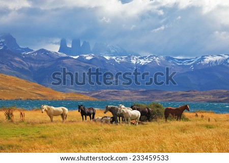On the horizon, towering cliffs Torres del Paine. Beautiful thoroughbred horse grazing in a meadow near the lake - stock photo