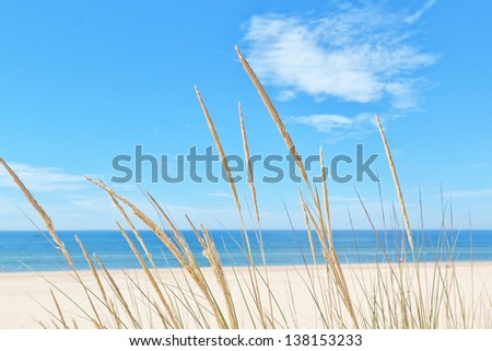 On the summer beach kind of grass on a background of sky and sea. - stock photo