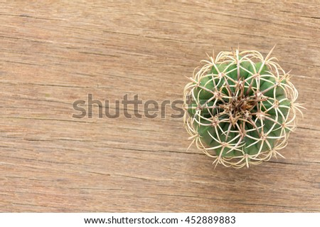 On top of a cactus Placed on a wooden floor Made visible sphere And the sharp spines of cactus. - stock photo