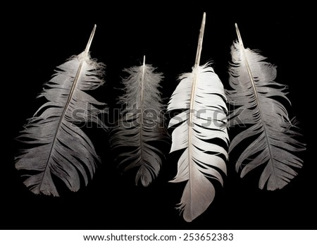 one bird feather - stock photo