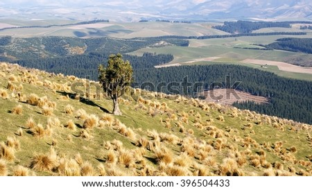 One cabbage tree in a tussock field - stock photo
