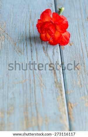 one carnation turquoise vintage wooden background with copy-space - stock photo