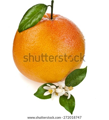 one citrus grapefruit with leaves close up isolated on white background - stock photo