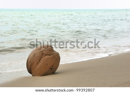 one coconut on the sand beach. - stock photo