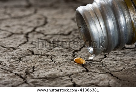 one corn and water drop on drought land as revival concept - stock photo