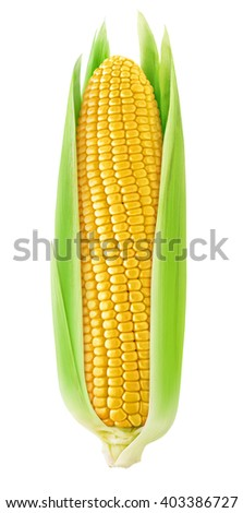 One corn cob with leaves isolated on white background with clipping path - stock photo
