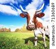 One cow graze on green meadow - stock photo