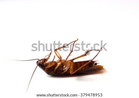 One dead cockroach turn face up on floor, isolate on white background. - stock photo