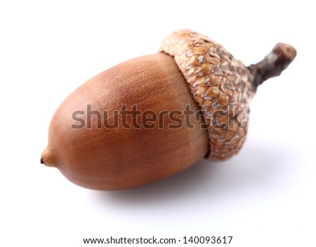 One dried acorn in closeup - stock photo