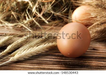 one egg  - stock photo