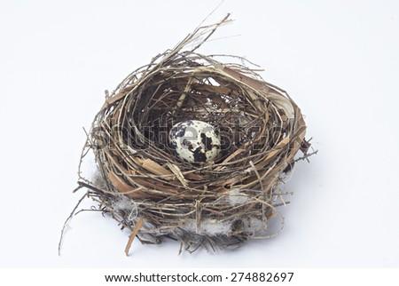 one egg in bird nest. - stock photo
