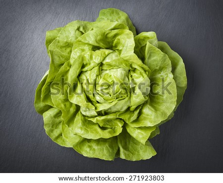 One fresh head of lettuce, isolated on a dark gray slate stone background. - stock photo