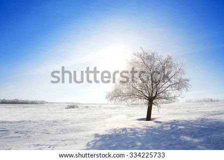 One Frozen tree on winter field and blue sky. Winter. - stock photo