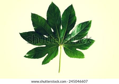 One green fresh beautiful plant.  - stock photo