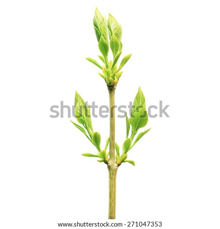 One green plant isolated on whith background - stock photo