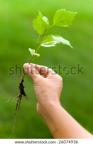 One hand holding a small plant of hibiscus - stock photo