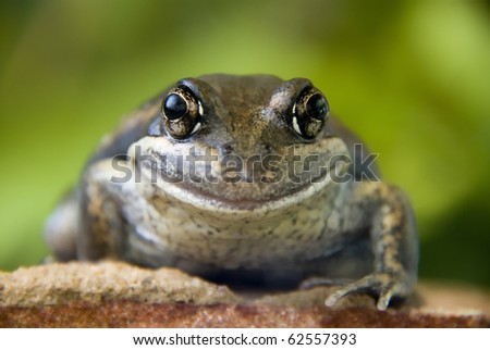One happy frog on a rock - stock photo
