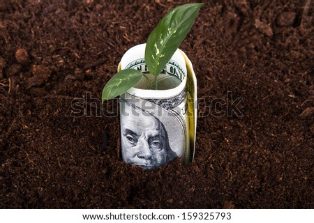One hundred dollar bill money growing in soil with green plant leaves. - stock photo