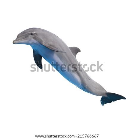 one jumping dolphin isolated on white background - stock photo