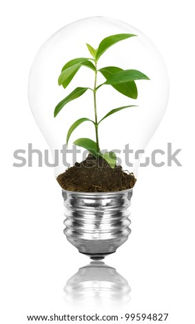 One lamp with plant inside on white background. Green energy concept - stock photo
