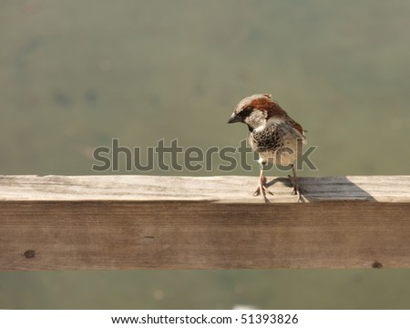 one little sparrow, space for text - stock photo