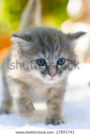 One month age walking kitten, shallow DOF - stock photo