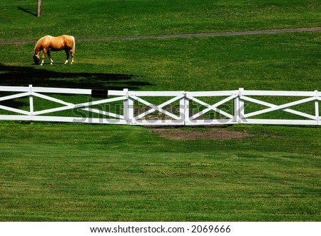 One of Elvis' Horses at Graceland mansion, Memphis, Tennessee. - stock photo