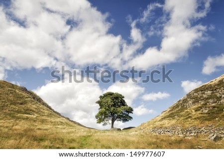 One of the most famous points on Hadrian�s Wall is Sycamore Gap, where a beautiful sycamore tree has withstood the rigours of the Northumberland weather for many years.  - stock photo