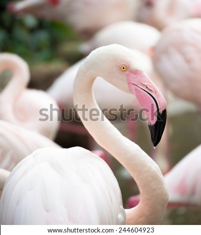 One pink flamingo closeup on blurred background - stock photo