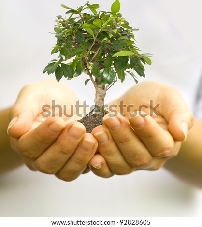 One plant in female hands - stock photo