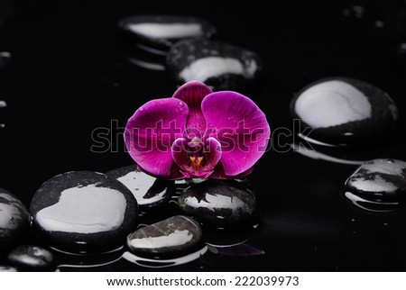 One red orchid flower and zen stones - stock photo