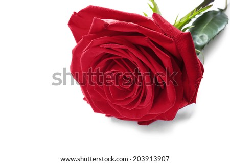 One red rose isolated over white - stock photo