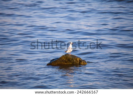 one seagull on the rock in the blue sea  - stock photo