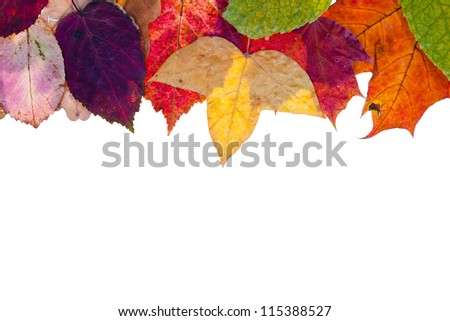 one side frame from multicolored autumn leaves isolated on white background - stock photo