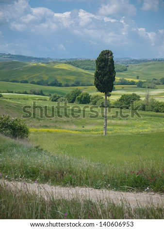 One single cypress tree in a wide open Tuscan landscape under a cloudy sky in spring - stock photo