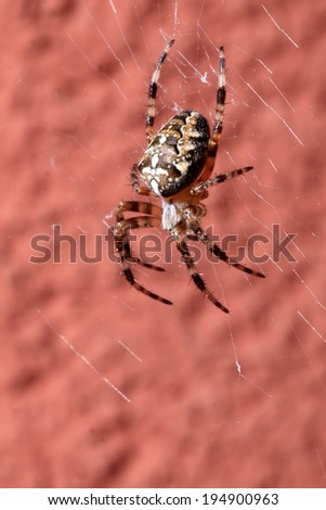 One Spider on wet web  - stock photo