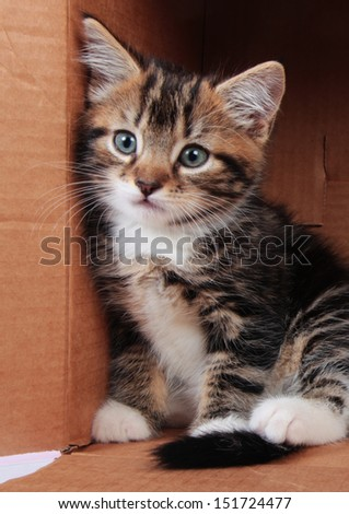 One tabby kitten with a thoughtful expression sitting in a cardboard box - stock photo