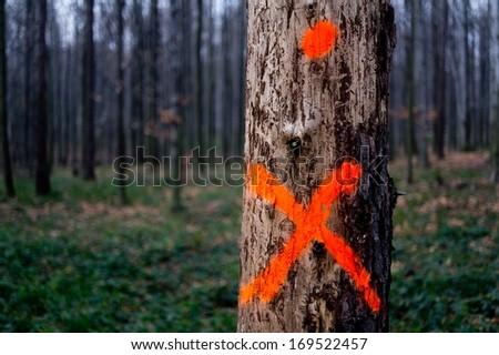 One tree  - stock photo