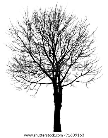 one tree silhouette isolated on white - stock photo