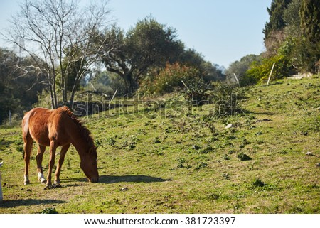 One wild horses grazing in a field, eating grass, the morning frost on the grass, horse looking at the camera, white and brown horses, steam from the nostrils, backlight, sun glare - stock photo