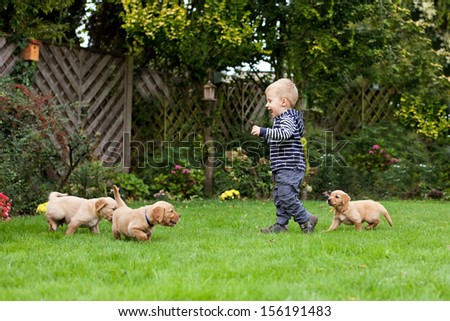 One year and half old boy playing with puppies in garden - stock photo